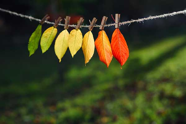 Renewable Energy Transition Time | Leaves Photo